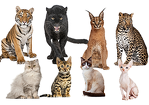 Cat Personality Test